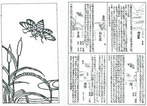 『和漢三才圖會』(江戸時代中期、寺島良安)